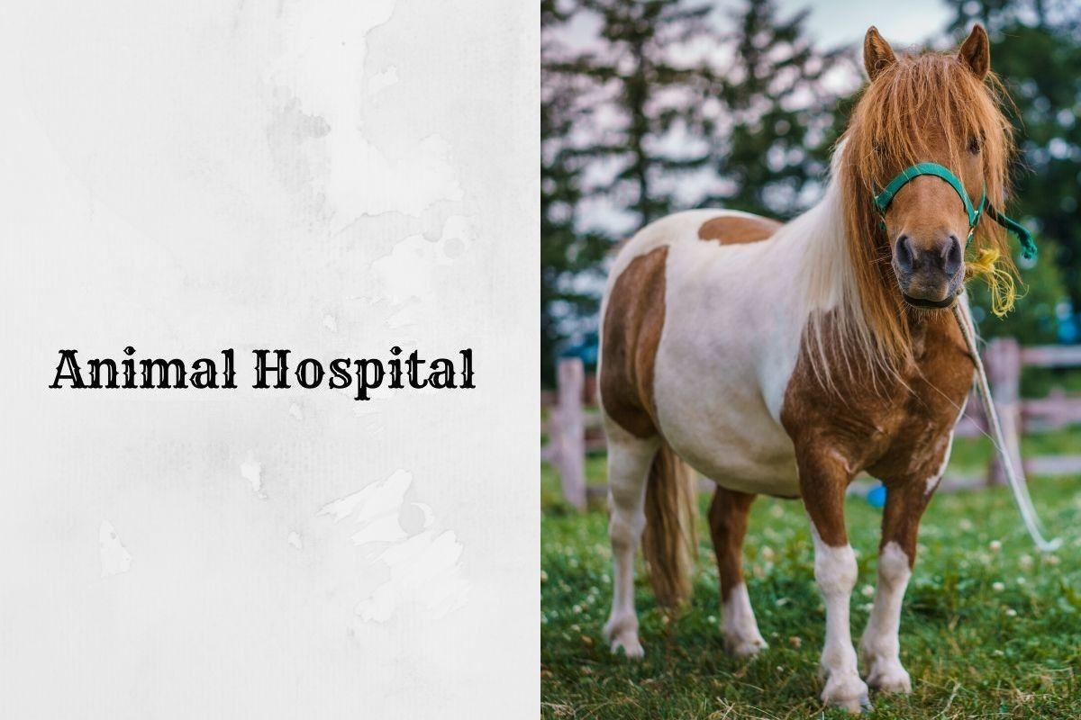 b2ap3_large_Animal-Hospital-Astori_20200722-200435_1