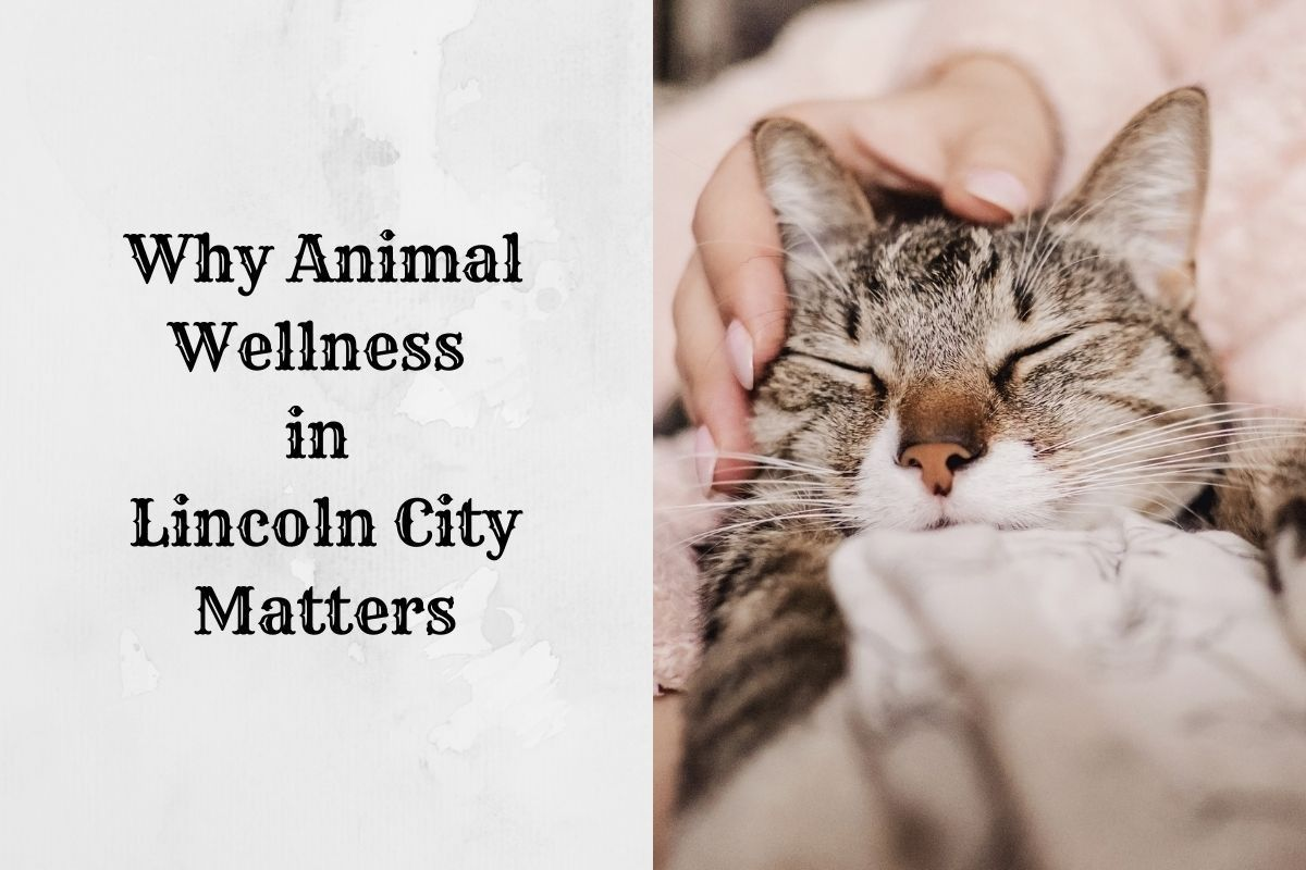 Why-Animal-Wellness-in-Lincoln-City-Matters