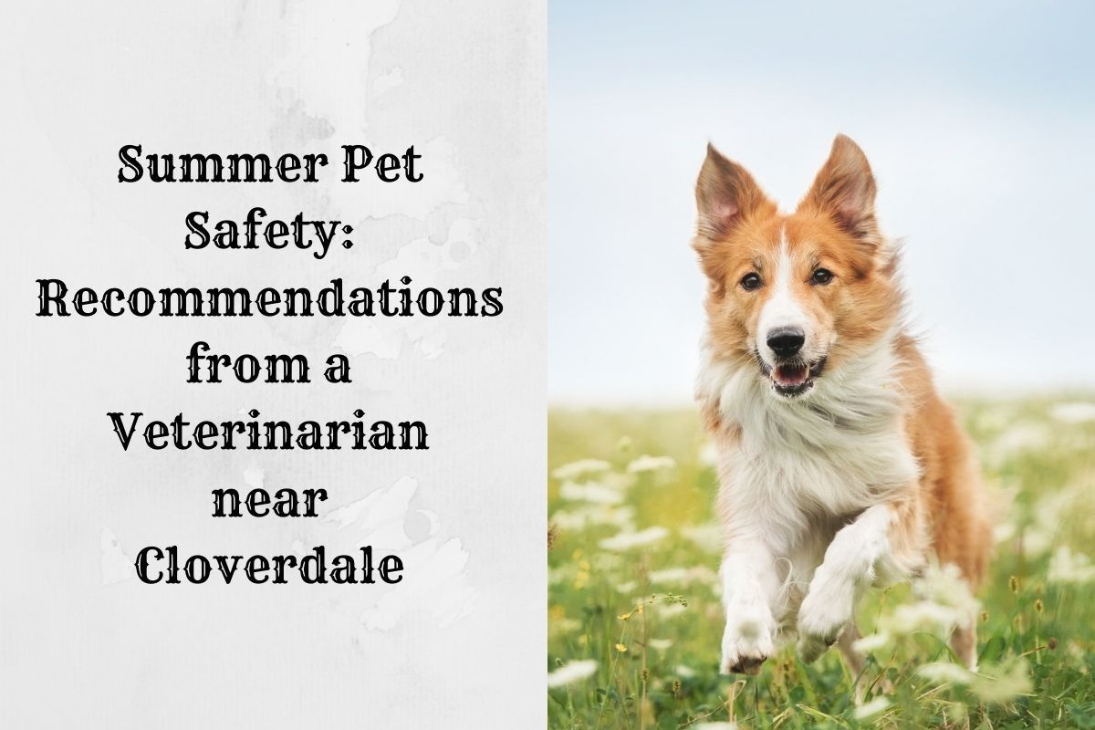 Summer-Pet-Safety-Recommendations-from-a-Veterinarian-near-Cloverdale